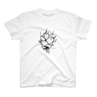 Agave(アガベ) ボタニカルアート T-shirts