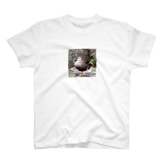 カカシポーズのカモさん T-shirts