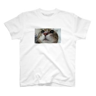 クゥさん T-shirts