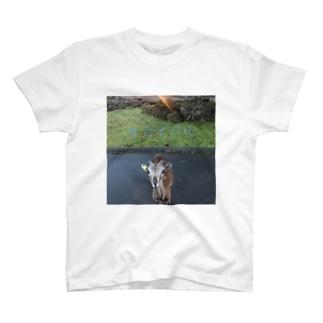サバイバル T-shirts