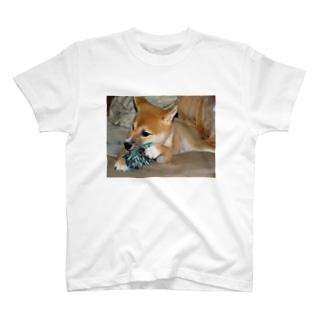 日本の犬:柴犬 Japanese dog: Shiba inu T-shirts