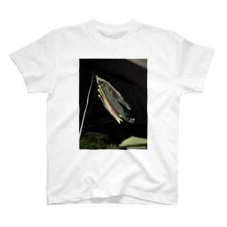 鯉のぼりグッズ T-shirts