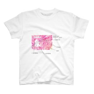 かんぞう。 T-shirts