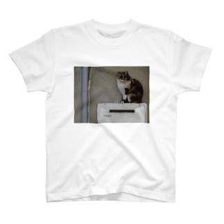 ここが落ち着くんです。 T-shirts