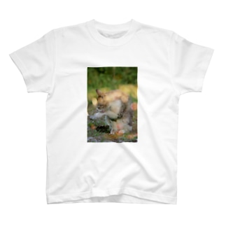 初夏。 T-shirts