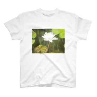 AKのhasu2 T-shirts