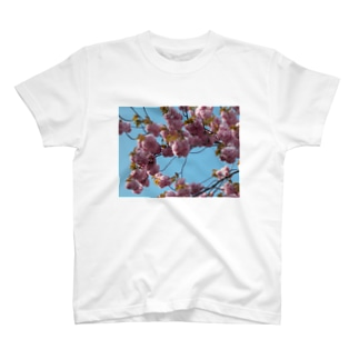 Cherry blossoms in this year 今年の桜 T-shirts