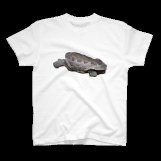 Yusuke Saitohのカメ T-shirts
