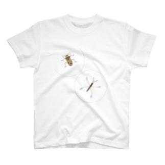 アメンボとケシカタビロアメンボ  T-Shirt