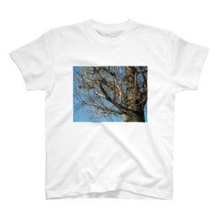 いつも心に木 T-shirts