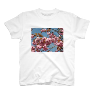 Cherry blossoms are close to Hanyu's monument 可憐な桜 T-shirts