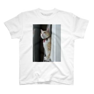 ジェントルGOMEZ T-shirts