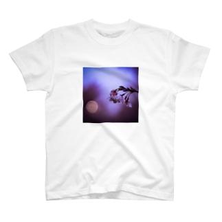 dull magenta T-shirts
