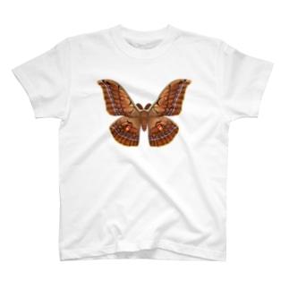 ヤママユ T-shirts