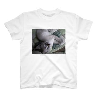 仔猫のすみ20090621 T-shirts