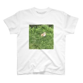 コーギーのわんちゃん T-shirts