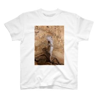 白澤さん T-shirts