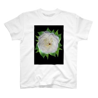 バラ01 T-shirts