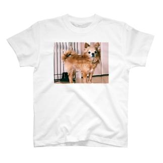 マロン13サイ T-shirts