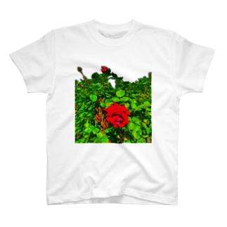 ローズガーデン🌹 T-shirts