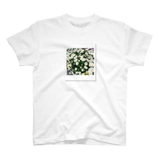 ノースポール Photo by cheki T-shirts