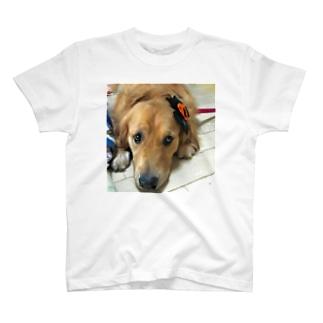ジェロニモ T-shirts