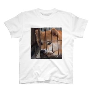 柴犬こはく ぶさいくver T-shirts