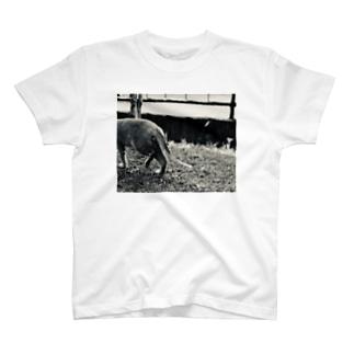 猫の金玉 、2個目 T-shirts