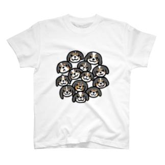 キャバリアちびっこトライカラー T-shirts