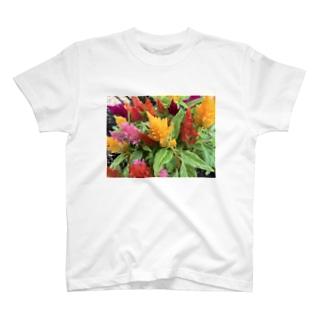 ケイトウ T-shirts