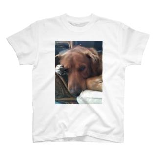 ビビり犬  ふ〜ちゃん T-shirts