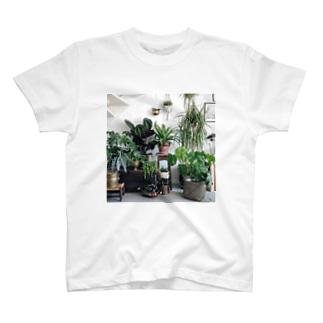 アグラオネティー T-shirts
