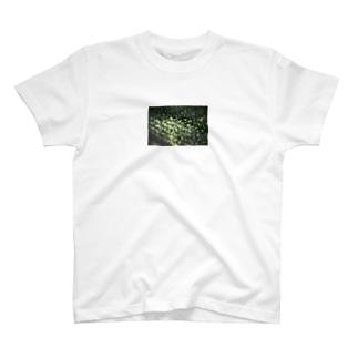 green light 2 T-shirts