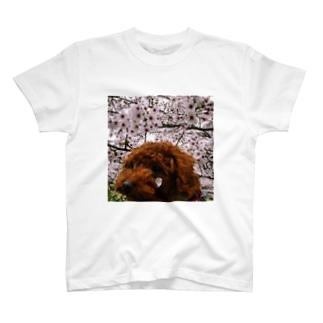 子犬のほっぺに桜 T-shirts