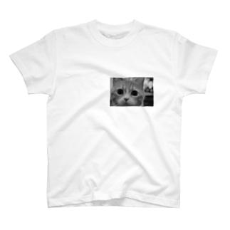 詰め寄る猫 T-shirts