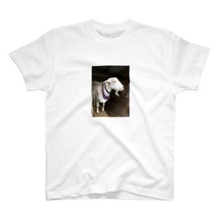 おしゃれヤギさん T-shirts