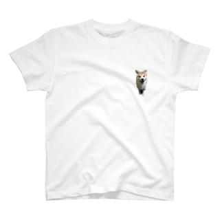 秋田犬ももくん ニコニコver. T-shirts