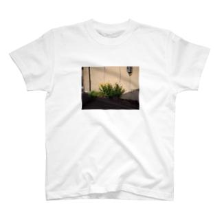toyama T-shirts