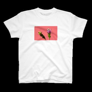 CALAKUEN(SOIL)のCurcuma alismatifolia -pink T-shirts