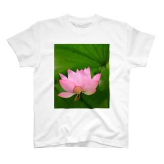 古代蓮 T-shirts