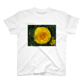 Dreamscapeの光よ!! 何処へ行くのか? T-shirts