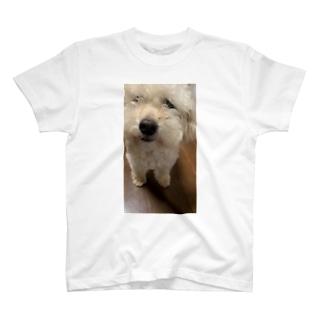 ワタボコリ T-shirts