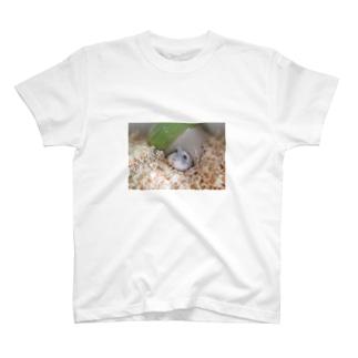 クヌギくん01 T-shirts