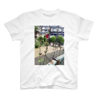 枯立葵 T-shirts