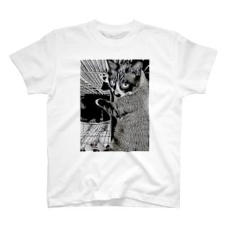ちょびひげふぁんくらぶ T-shirts