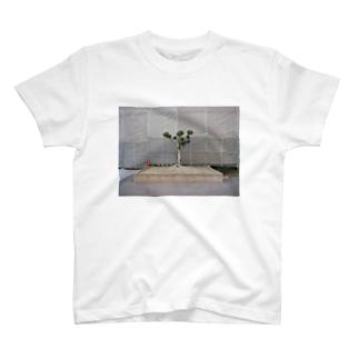 小さい松の木 T-shirts