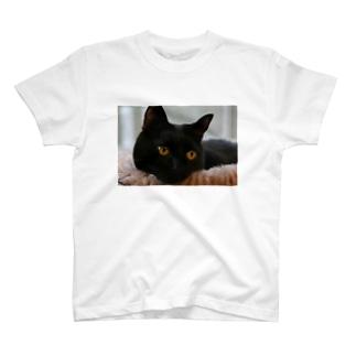 黒猫ヴィヴィの日向ぼっこ T-shirts
