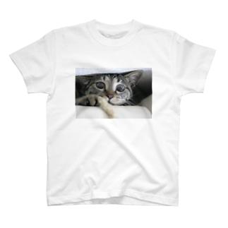 キジトラはなぷ~の好奇心 T-shirts