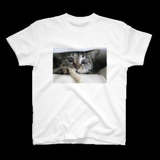 polepole-officeのキジトラはなぷ~の好奇心 T-shirts