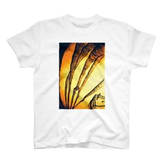 管 T-shirts